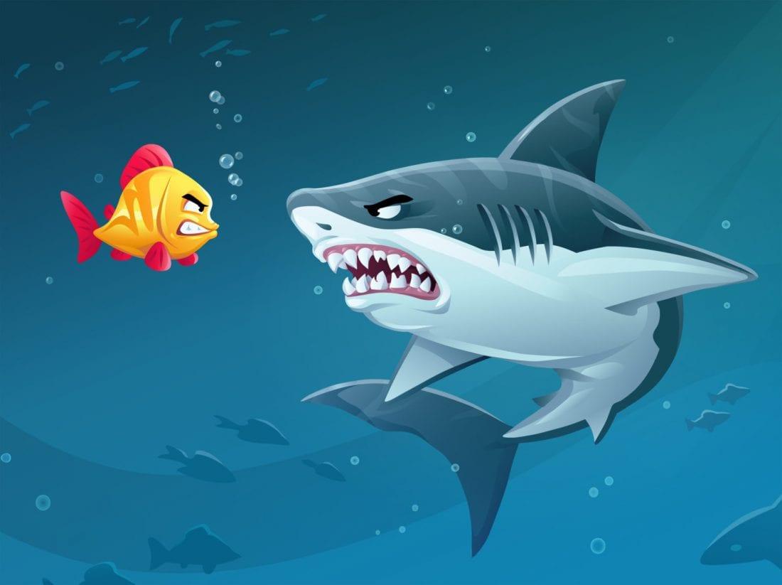 NCR brave fish